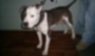 Molly_Rhyn1.png