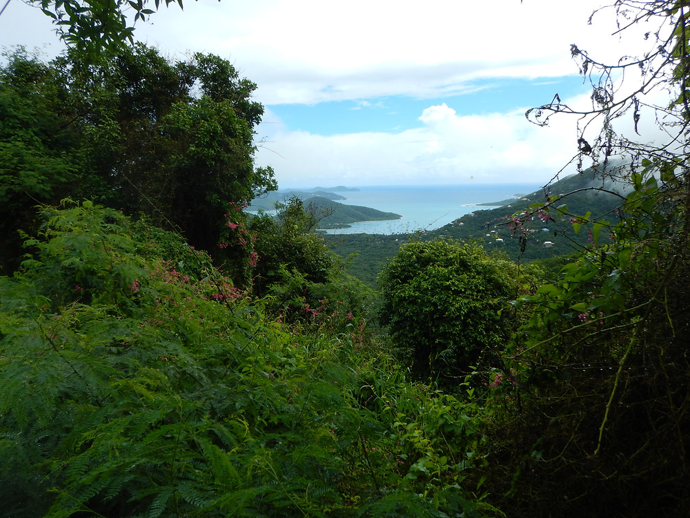 Drinking and driving in the Caribean. Hitchhiking. Views from the road. Coral Bay. St. John. Royal Vagabonds.