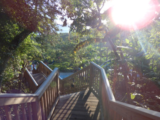 Eco-Camping: Swiss Family Robinson Style