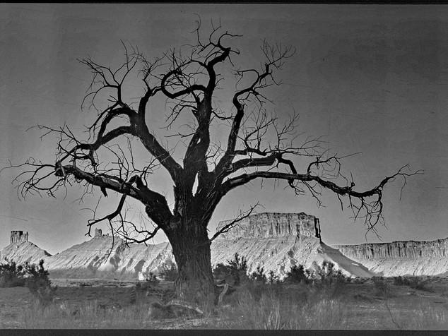 dead tree - moab, utah 2