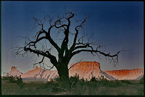 dead tree moab