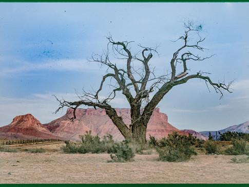 dead tree - moab, utah
