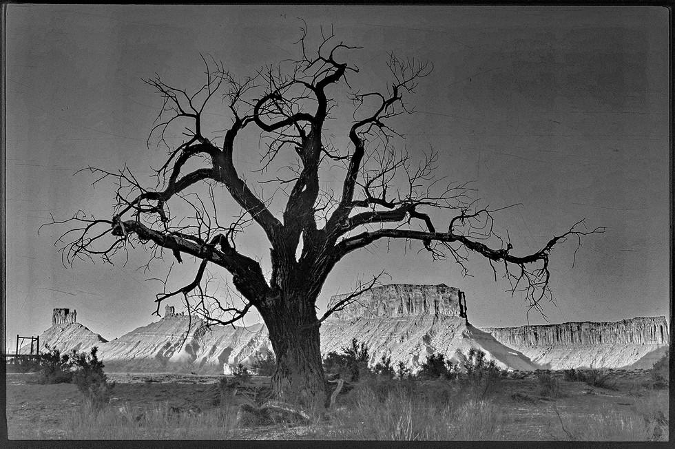 dead tree castle valley - print à venda