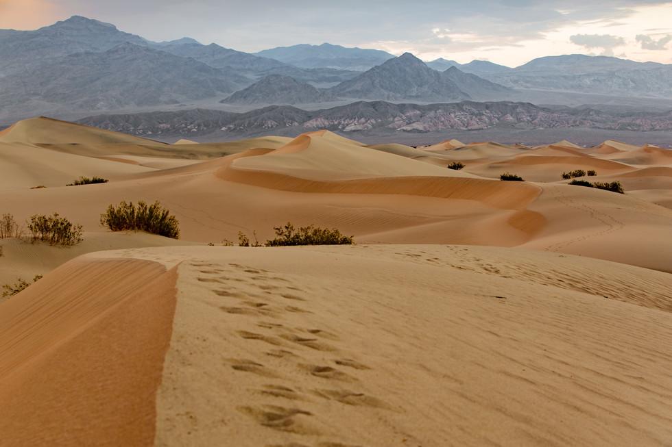 dunes - print à venda