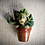 """Thumbnail: Crénature""""plante""""VJ"""