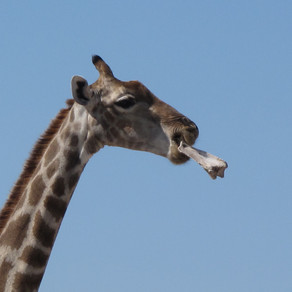 Namibia - Game viewing at its best in Etosha