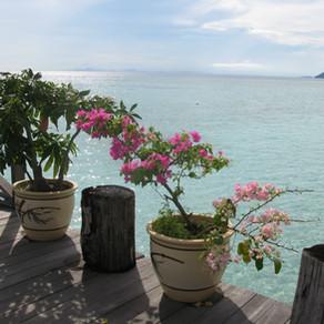 Malaysia - New Years Eve on Pom Pom Island