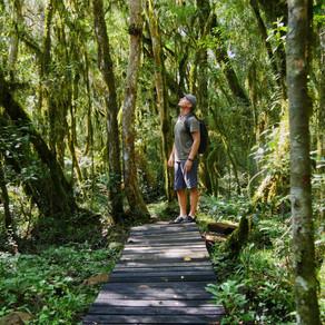 Floresta Nacional de São Francisco de Paula, RS