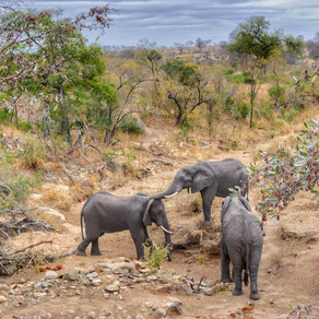 Secret Elephant Ritual