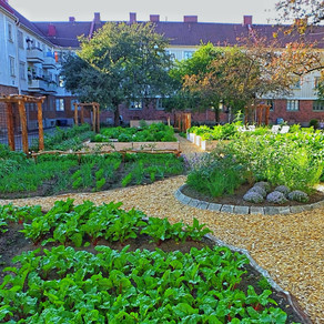 Urban Edible Gardens
