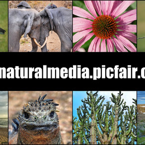The Natural Media is at PicFair