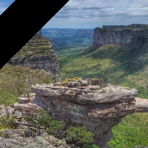 we are in mourning for the Brazilian natural environment