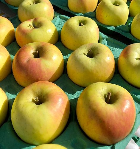 りんご 群馬名月.jpg
