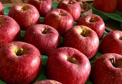 りんご サンふじ.jpg