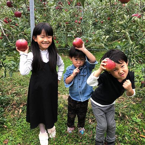 子ども りんご狩り.JPG