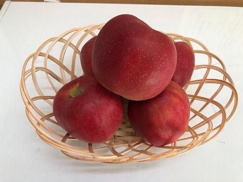 りんご 紅玉.jpg