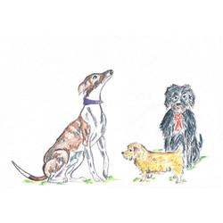 3dogs-website-gallery