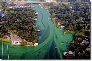 Algae Bloom - Background info.jpg