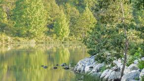 Your Next Destination: Black Hill Regional Park
