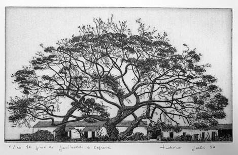 Il pino piantato da Garibaldi