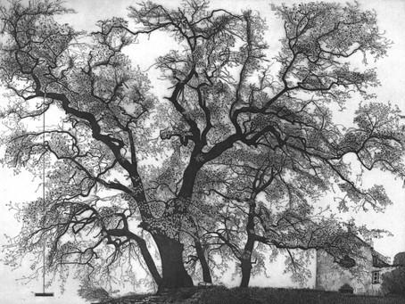 Federica Galli. Ritratti di alberi