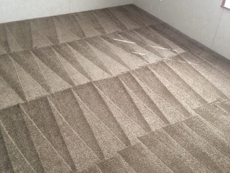 5 Signs Your Carpet Has Mold
