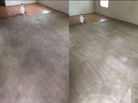 Dog, Cat, Pet Odor removal in Granger Indiana