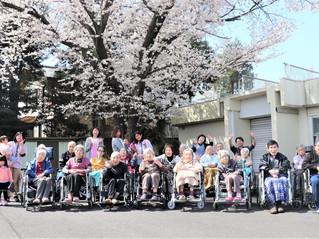 ひまわり保育園との「合同花見会」
