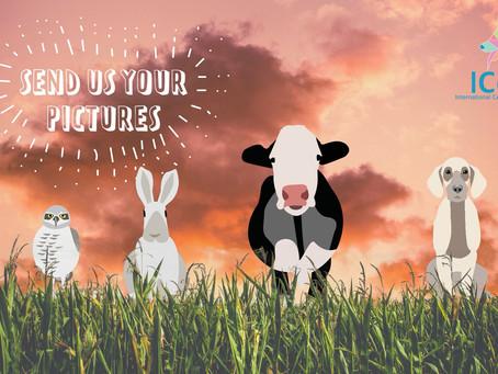 Vil du dele bilder/video av dyret ditt?