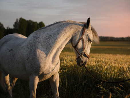 Hestens helsefremmende kraft!