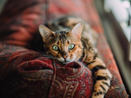 Dyr rammes ikke av Covid-19-smitte, men kan være bærere av viruset.