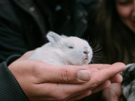 Hva mener vi om økt salg av kjæledyr på grunn av koronakrisen