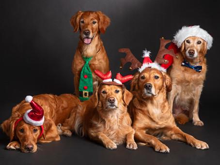 Julekalender som gleder to- og firbeinte!