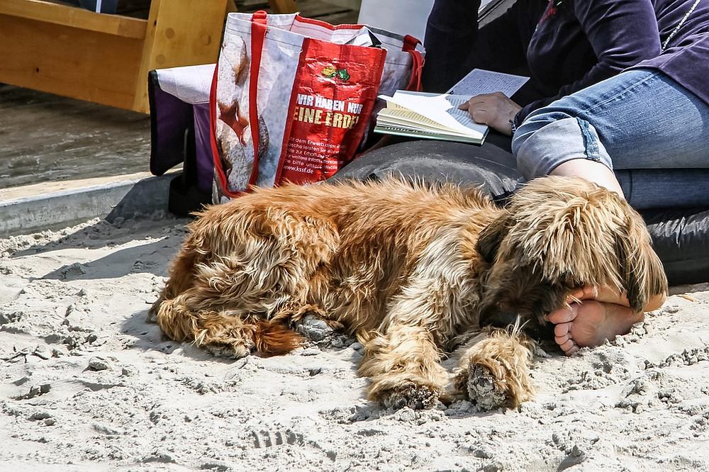 Urlaub mit Ihrem Hund auf Rügen