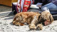 Hundefreundlicher Urlaub mit Hund auf Rügen