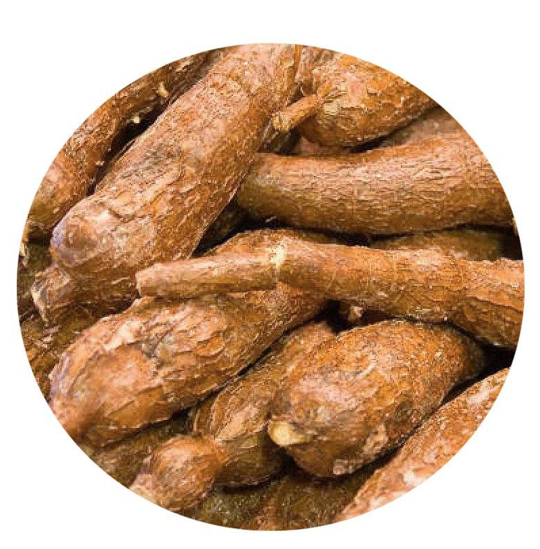 cassava root bio plastic alternative