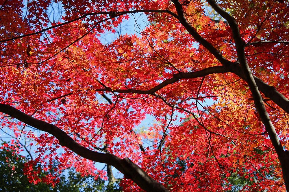 京都 糺の森