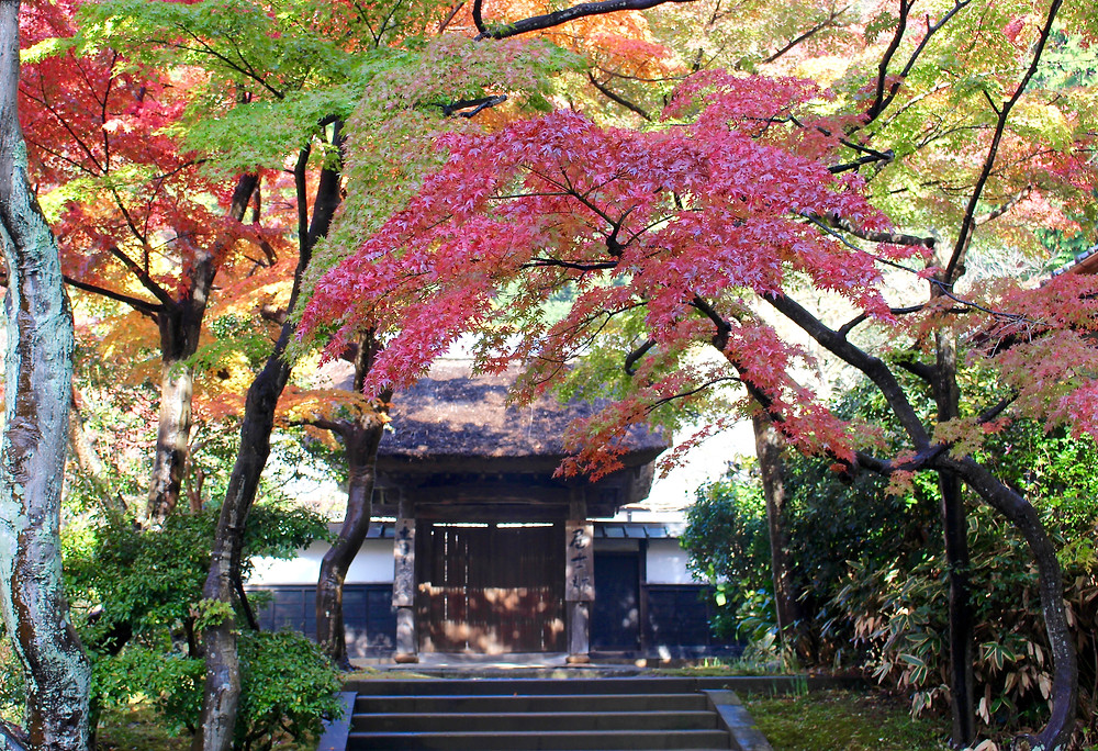 鎌倉円覚寺 紅葉
