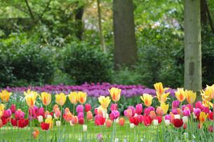 ヨーロッパ春の庭園から