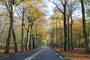 オランダ 秋の情景