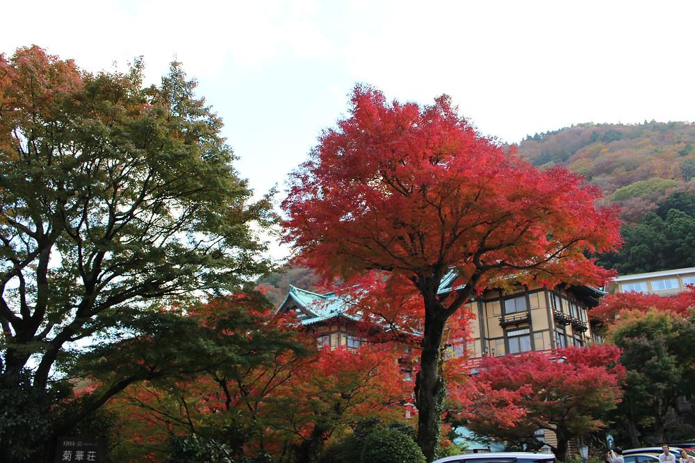 箱根 富士屋ホテル 紅葉