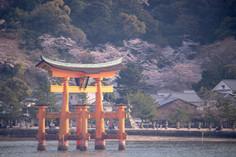 2019 春 宮島 厳島神社