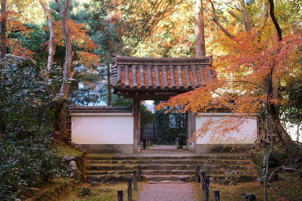 京都 地蔵院 紅葉