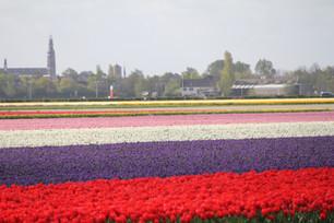ヨーロッパの美しい花畑を一巡り
