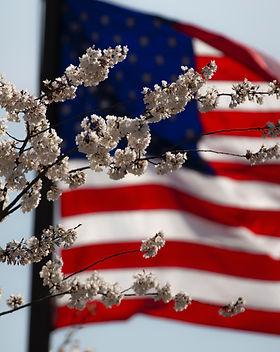 american-flag-flower-july-4th-1093645.jp