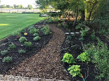 Bark path with small shrubs
