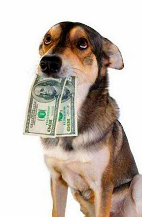 Dog Walking Pricing Winchester