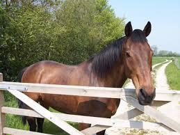Bridge Farm Cottages horses Brigham, Dri