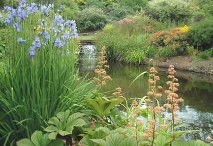 pond garden on country estate near Tarpo