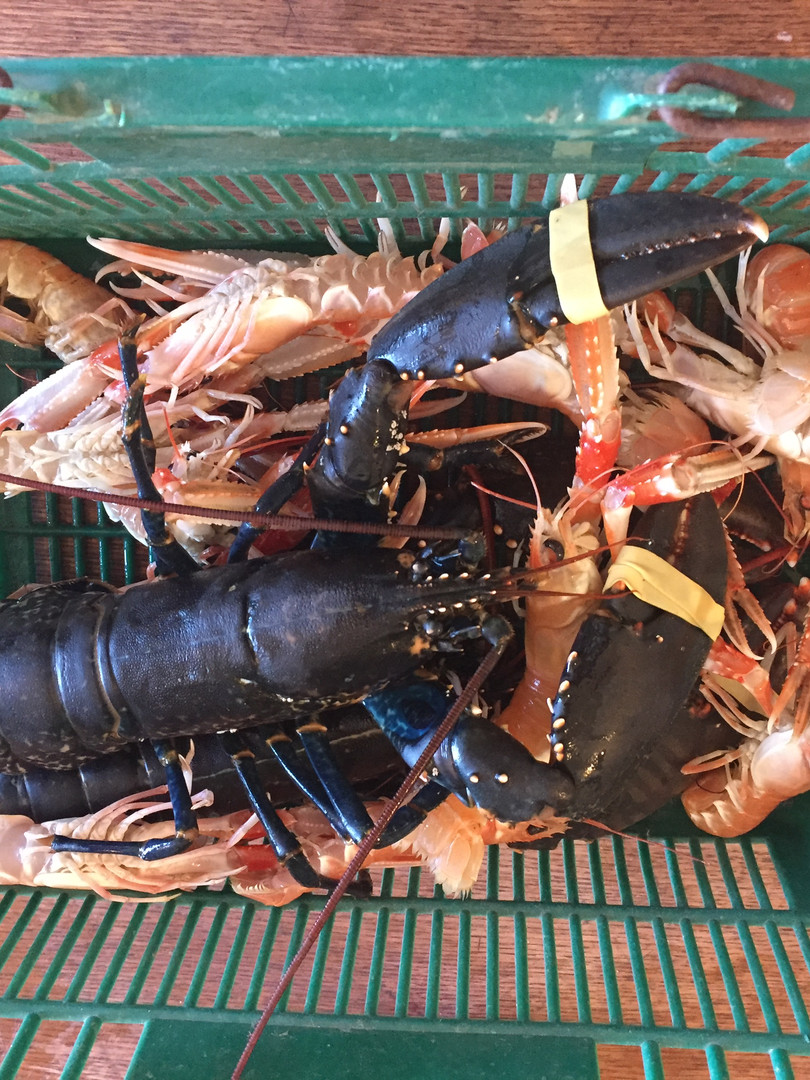 Freshly caught seafood at Gallanach Lodge